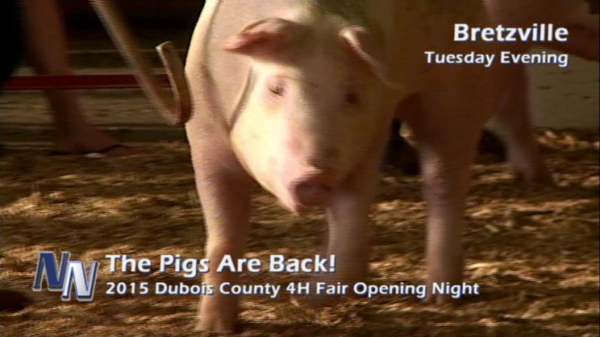 Pigs Are Back At The Fair! (VIDEO)